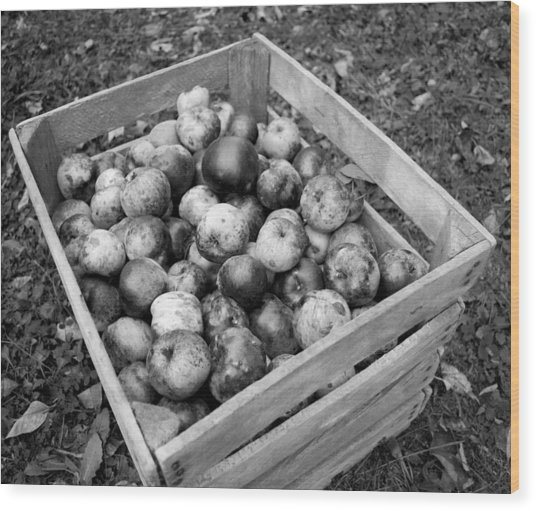 Crate Of Wellness Wood Print by Michael Jalbert
