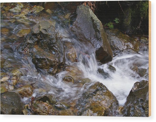 Creek Scene On Mt Tamalpais Wood Print