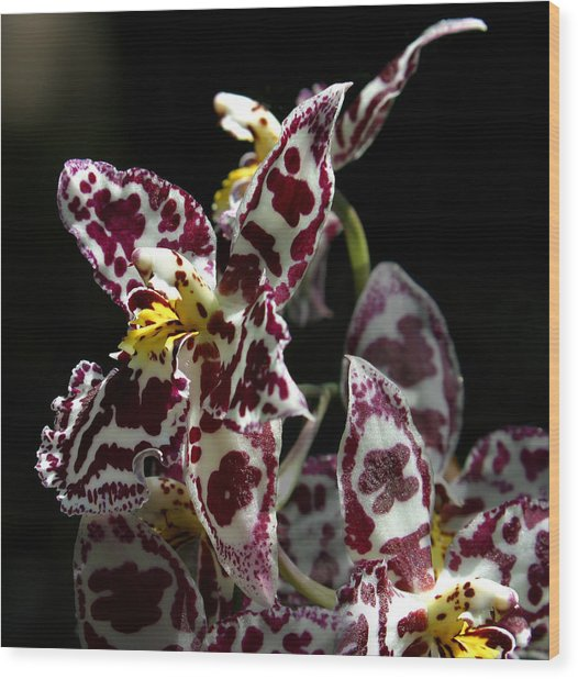 Cribet Exotic Orchids Wood Print