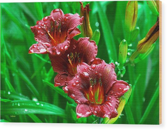Crimson Lilies In April Shower Wood Print