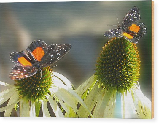 Crimson Patch Butterfly Wood Print