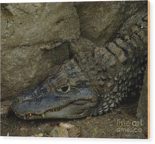 Gator Rock Wood Print