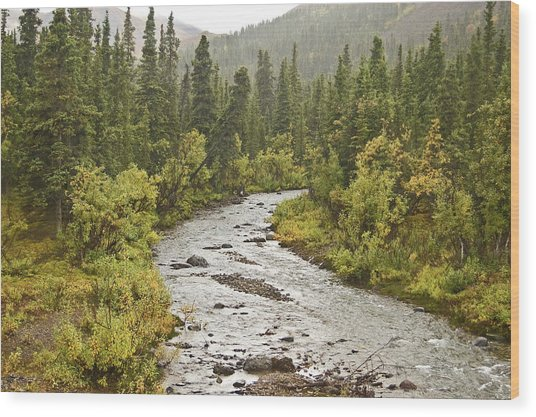 Crossing The Stream In Denali Wood Print by Jim and Kim Shivers