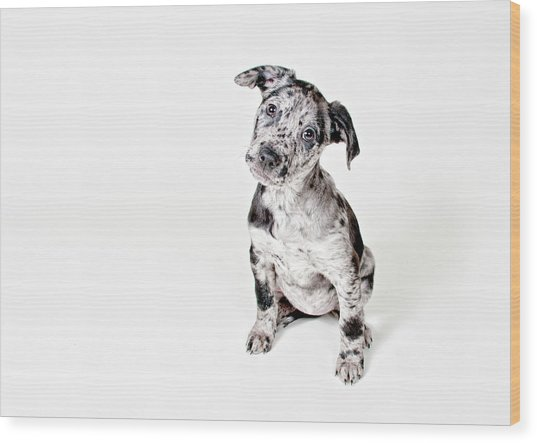 Curious Puppy Wood Print