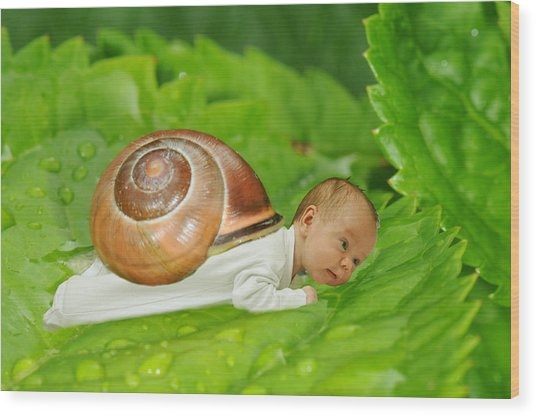 Cute Baby Boy With A Snail Shell Wood Print