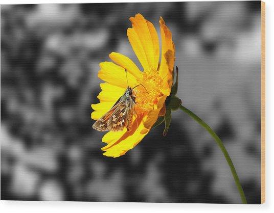 Cute Butterfly On Yellow Gerbera Daisy Wood Print