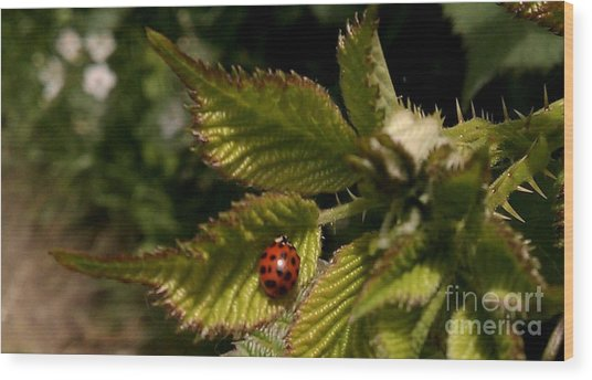 Cute Red Ladybug  Wood Print