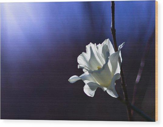 Daffodil Light Wood Print