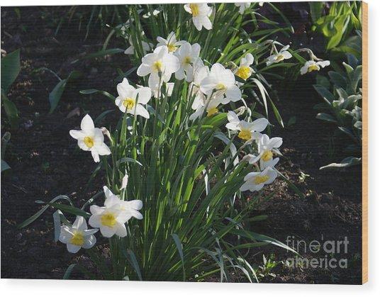 Daffodils Of Suzdal Wood Print by Padamvir Singh