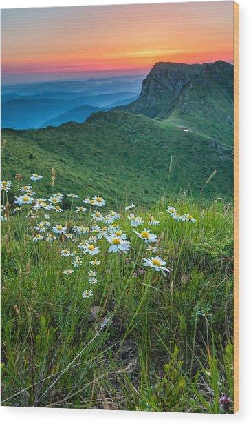 Daisies In The Mountyain Wood Print