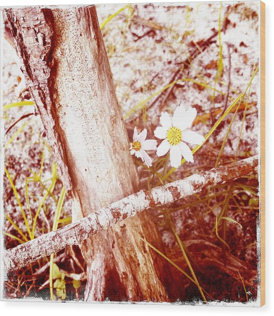 Daisy In The Rough Wood Print by Frank Winters