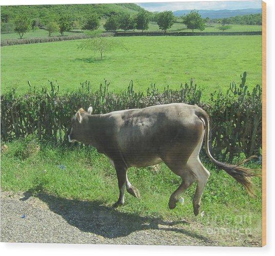 Dancing Cow Wood Print by Robin Ziegelbaum