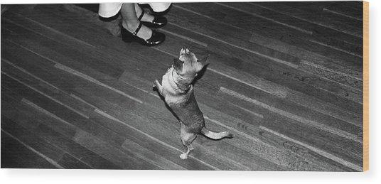 Dancing Dog  Wood Print