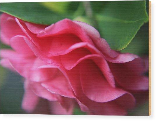 Dancing Petals Of The Camellia Wood Print