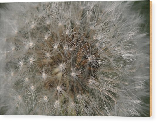 Dandelion Fairy Seeds Wood Print