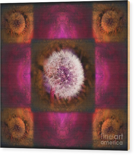 Dandelion In Flame Wood Print by Laura Iverson