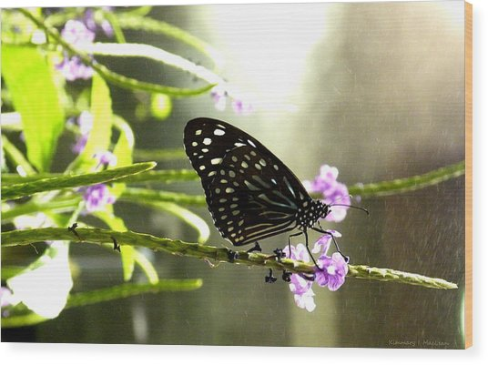 Dark Blue Tiger Butterfly In The Rain Wood Print