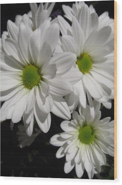Darlin' Daisies Wood Print