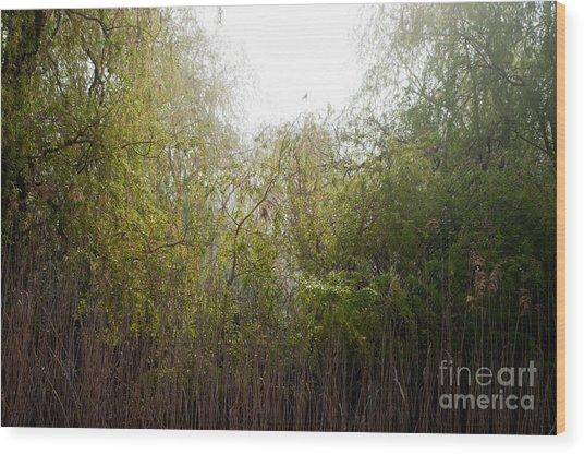Darlington Park From Mclaughlin Bay Wood Print by Gary Chapple