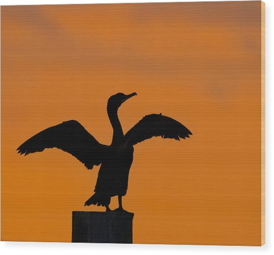Dawn Of A Double-crested Cormorant  Wood Print