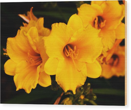 Day Lilly 1 Wood Print by Barry Jones