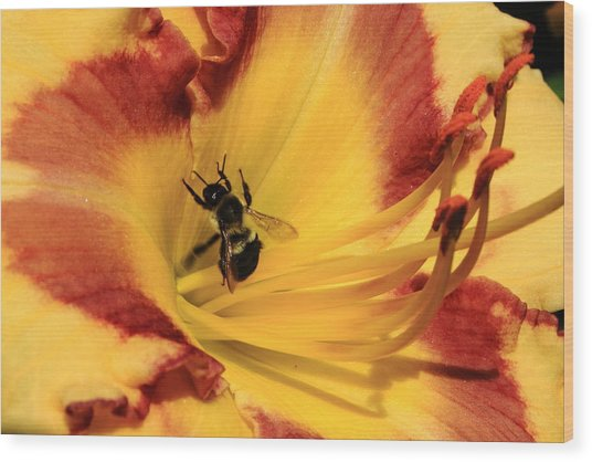 Day Lilly IIi Wood Print