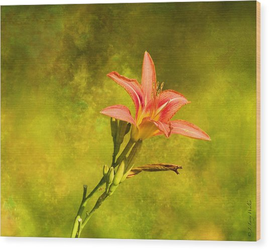 Daylily All Alone Wood Print by J Larry Walker
