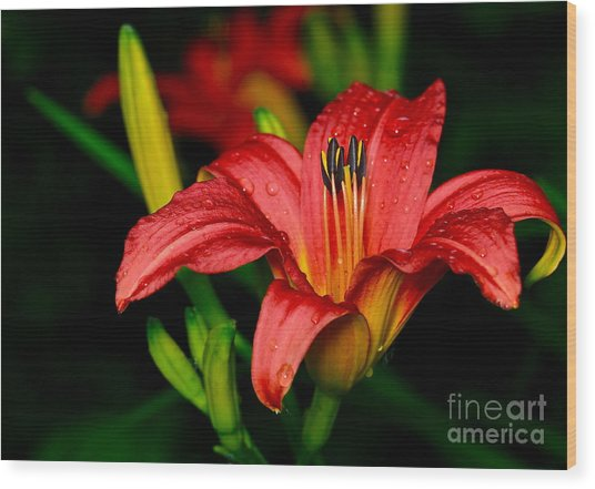 Daylily Wood Print by Ronald Monong