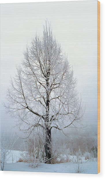 Deep Solitude Wood Print
