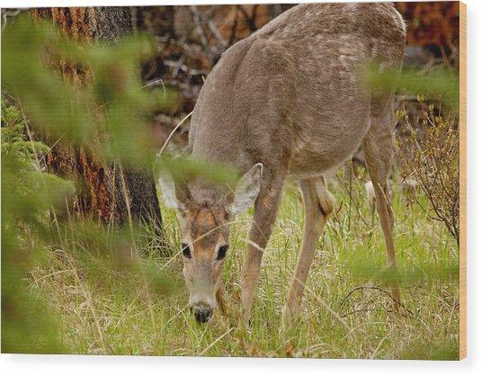 Deer 1661 Wood Print by Larry Roberson