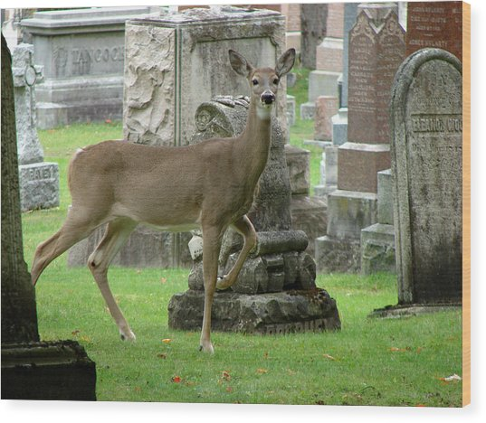 Deer Among The Headstones Wood Print