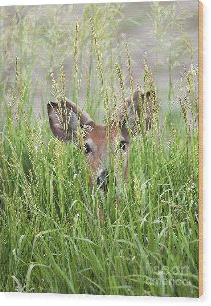 Deer In Hiding Wood Print