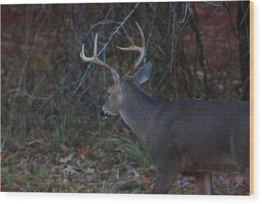 Deer Wood Print by Jake Busby