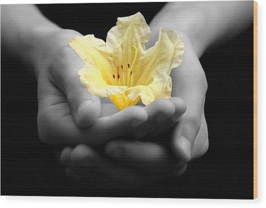 Delicate Yellow Flower In Hands Wood Print