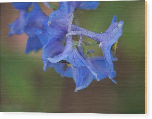 Delphinium 1 Wood Print by Jessica Lowell