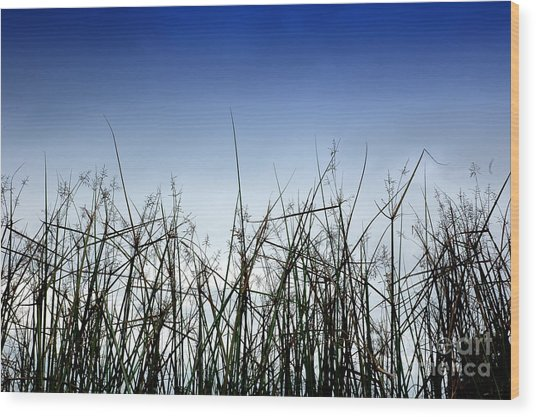 Desert Grass Wood Print by Antoni Halim