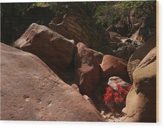 Desert Paintbrush Zion National Park Wood Print