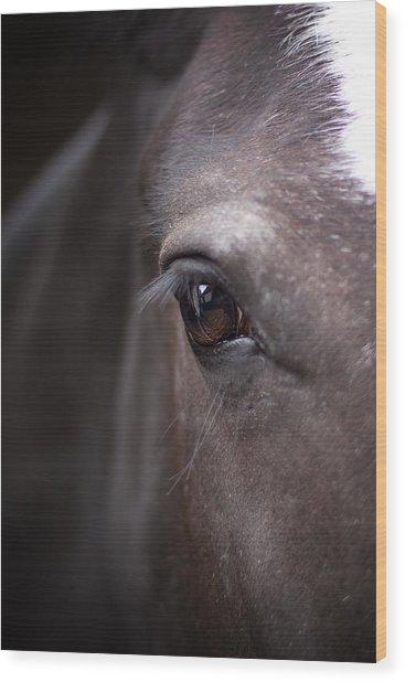 Detailed Close Up Of Black Horse's Eye Wood Print
