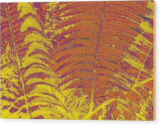 Digital Ferns Wood Print by Colleen Cannon