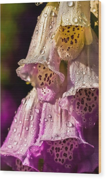 Digitalis Wood Print