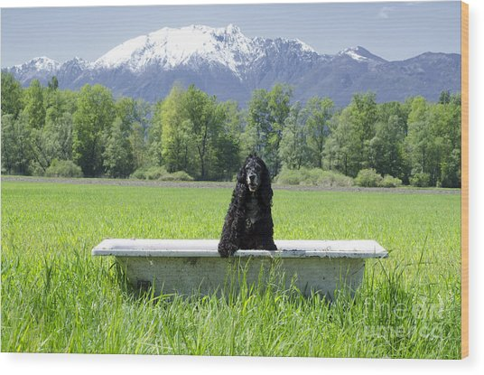 Dog In Bathtub Wood Print