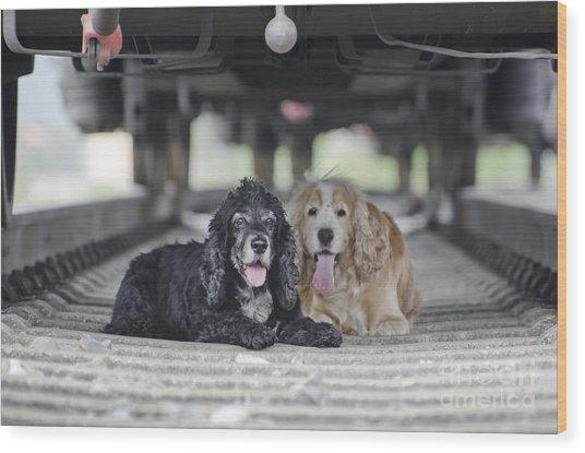 Dogs Lying Under A Train Wagon Wood Print
