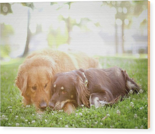 Dogs Snuggling Outside Being Cute Wood Print by Jessica Trinh