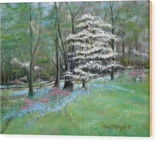 Dogwood In Springtime Wood Print by Max Mckenzie