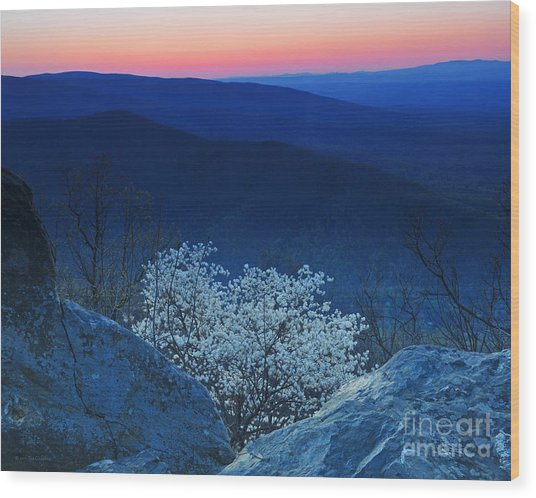 Dogwood Spring Sunset Blue Ridge Parkway Wood Print