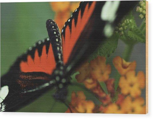 Doris Longwind Red Version Wood Print