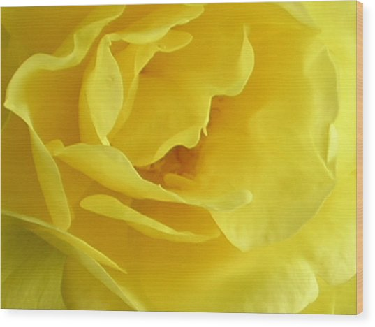 Double Daffodill Wood Print by Tina Ann Byers