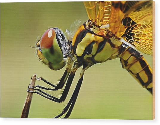 Dragon Fly Wood Print by Michelle Armstrong