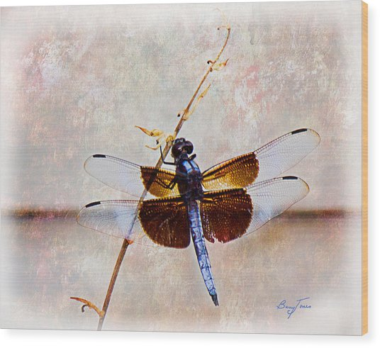 Dragonfly Clinging Wood Print by Barry Jones