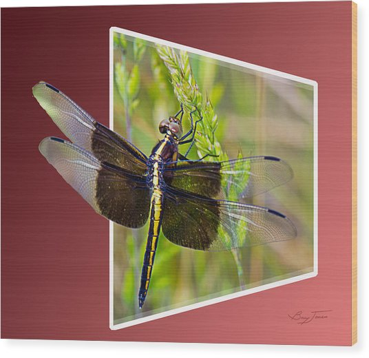 Dragonfly Holding On Wood Print by Barry Jones